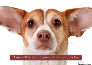 A importância da higienização dos ouvidos em pets
